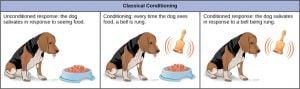 Teori Belajar menurut Ivan Petovich Pavlov : Classical Conditioning